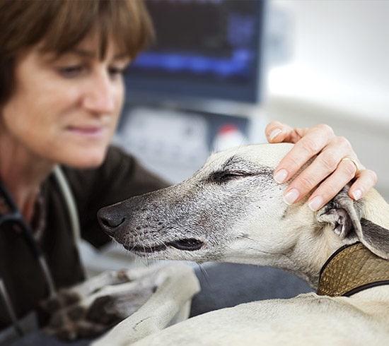 Tierärztin, Diplomate für Innere Medizin