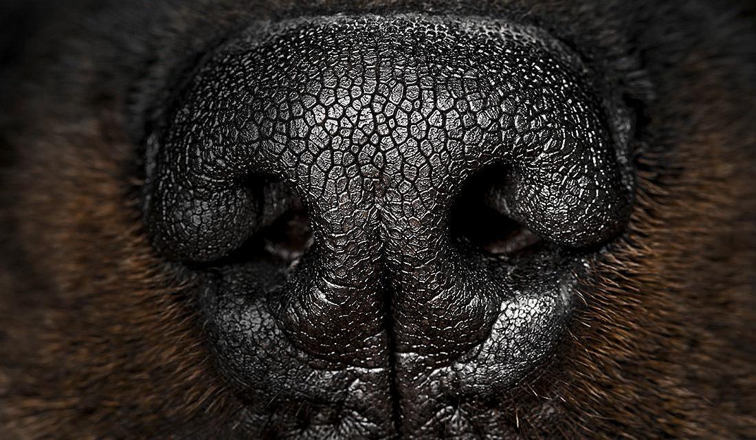 Welt der Tiere. Welt der Wunder: Die Hundenase