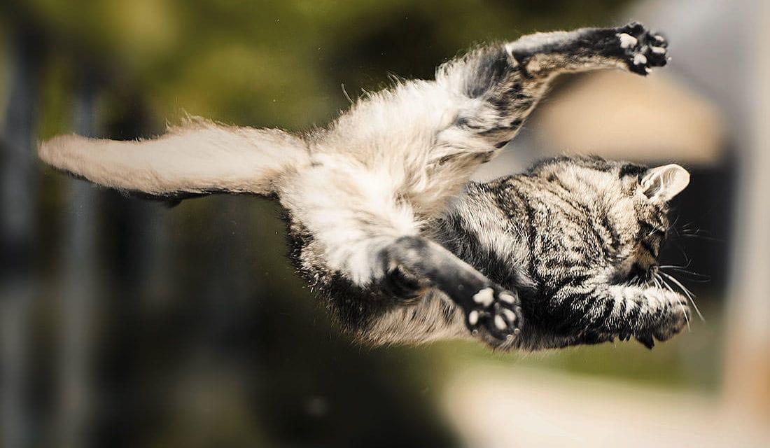 Welt der Tiere. Welt der Wunder: Der Drehreflex der Katze
