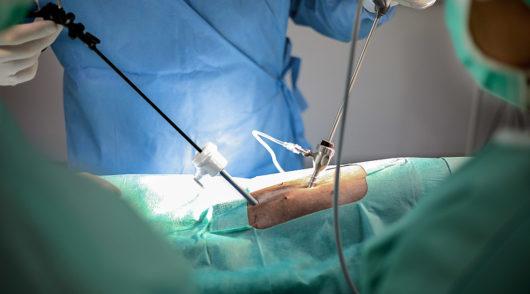 vet-tierarzt-chirurgie-laporoskopie-IMG_4093
