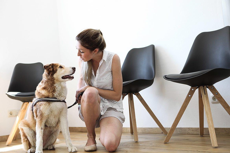 Wartebereich Hund