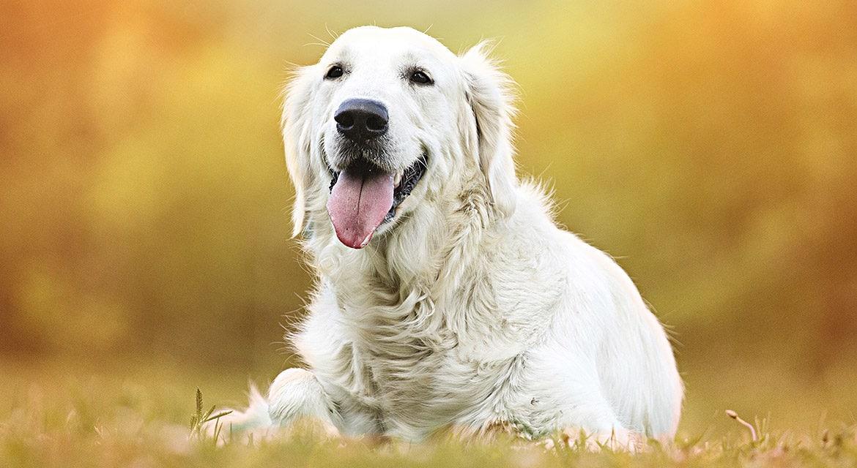 Vortragsabend für Tierärzte: Lahmen Hunde in der Schweiz anders?