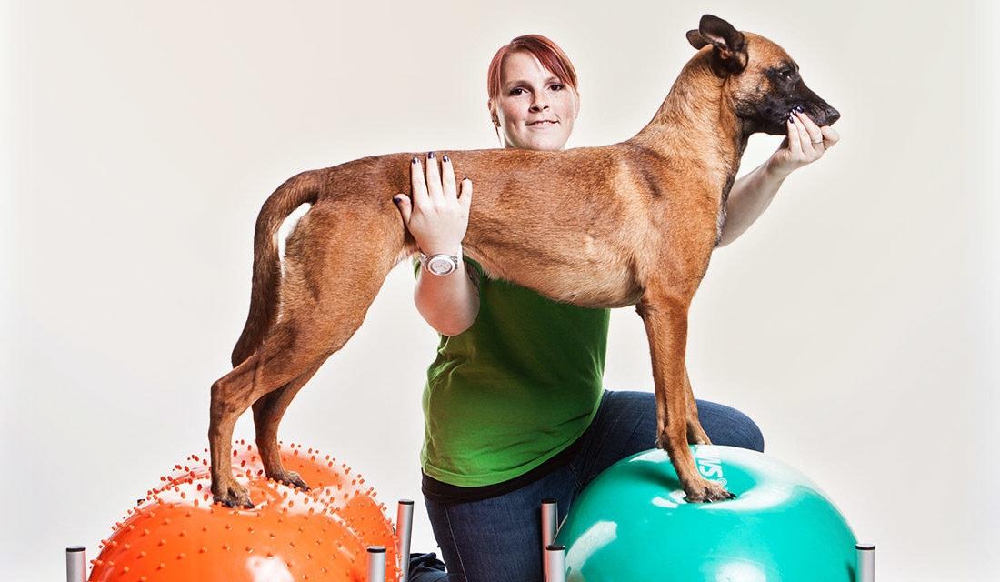Neu im Vet Zentrum: Physiotherapie für Hunde