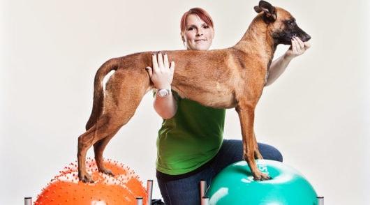Physiotherapie für Hunde im Vet Zentrum BGL