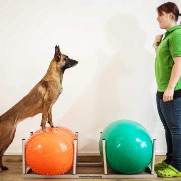 Muskelaufbau und Konditionstraining