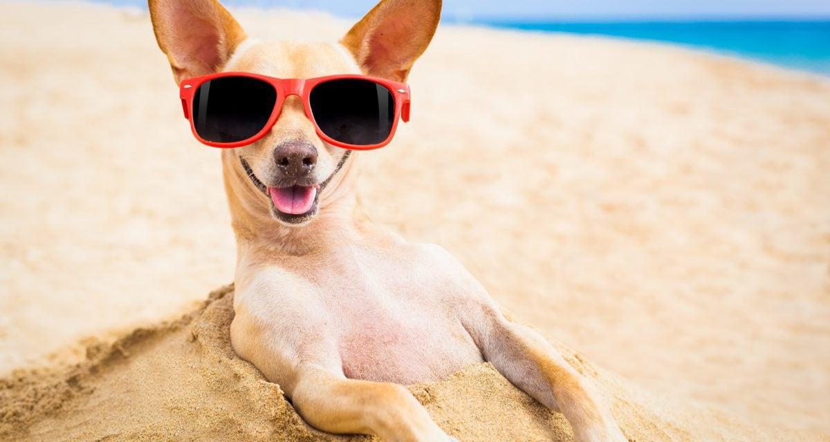 Sommerhitze: Hunde-Tipps für die heißen Tage
