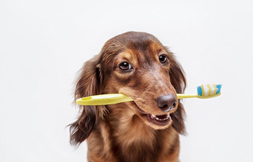 Zahnmedizin und Dentalröntgen für Tiere